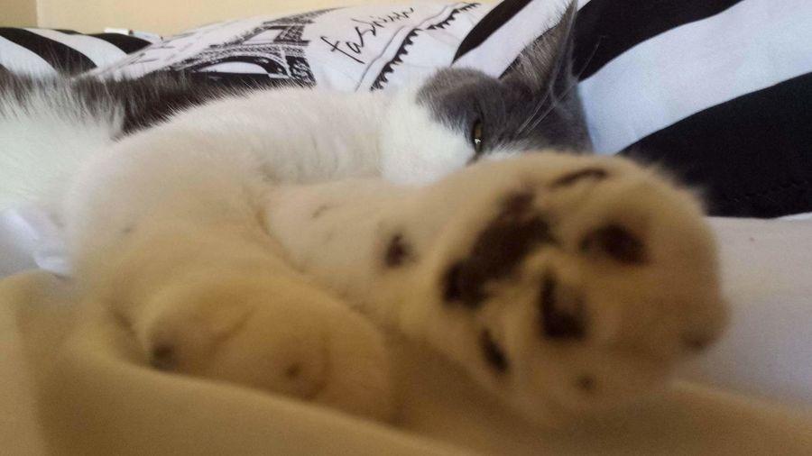 Pets Mouss Cat♡ Sleep Cute♡ Love♡ Blanc Gris Confortable