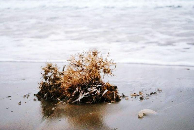 Beach Alagadi Cyprus Seaside Eyemphotography
