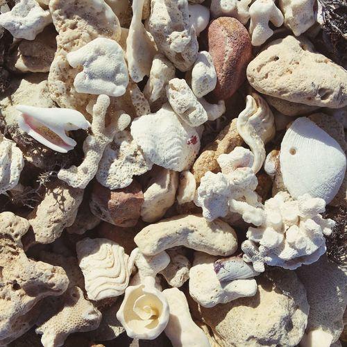 Beach Beachtresures Shells Coral Stones Beautiful Holiday Sunny FreeTime Warm Light And Shadow Relaxing Urlaub Egypt El Quesir Flamenco Resort Red Sea Ocean