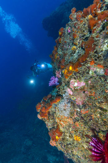 Underwater view of marine life and coral formation Blue Ocean Dive Site In Tenggol Island Ocean View Scuba Diving Tokong Timur Dive Site Colourful Nature Fish Marine Life Outdoor Photography Reef Scenic View Scuba Diver Soft Coral Underwater underwater photography