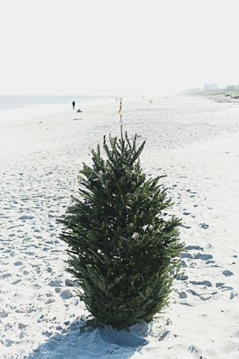 Christmas at the beach Tree Hot Christmas Tropical Christmas Beach Christmas Christmas Tree Christmas Beach Sea Outdoors Nature Sand Day Tranquility Water
