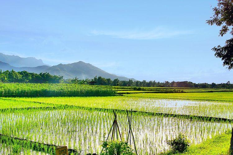 Lovely vilage - east Java (Indonesia)