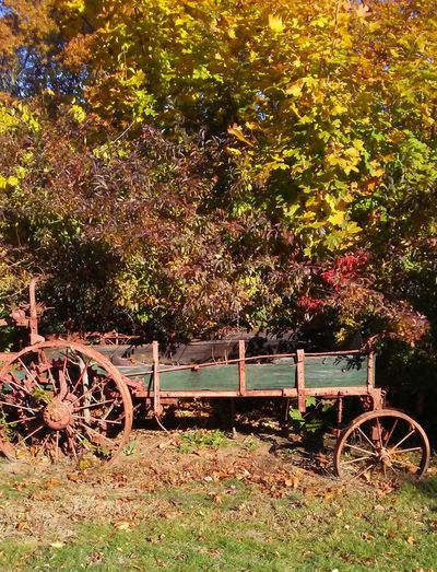Wagon Wheel Outdoors Beauty In Nature Connecticut Pics Taking Photos Showmetheworld Somethingbeautiful