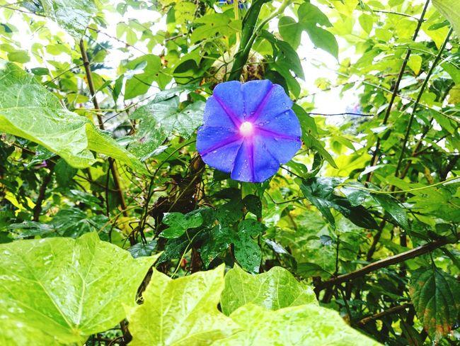Nature Photography Flowers,Plants & Garden