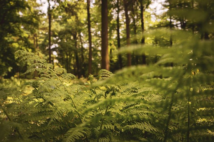 Close-up of fern leaves and trees in forest