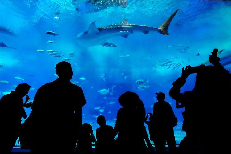 Silhouette Vertebrate Fish Animals In Captivity Animals In The Wild Aquarium Water Group Of People Tank Animal Wildlife Underwater Blue Real People Group Of Animals