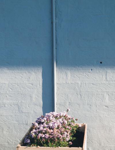 Flower Close-up Architecture Plant My Best Photo