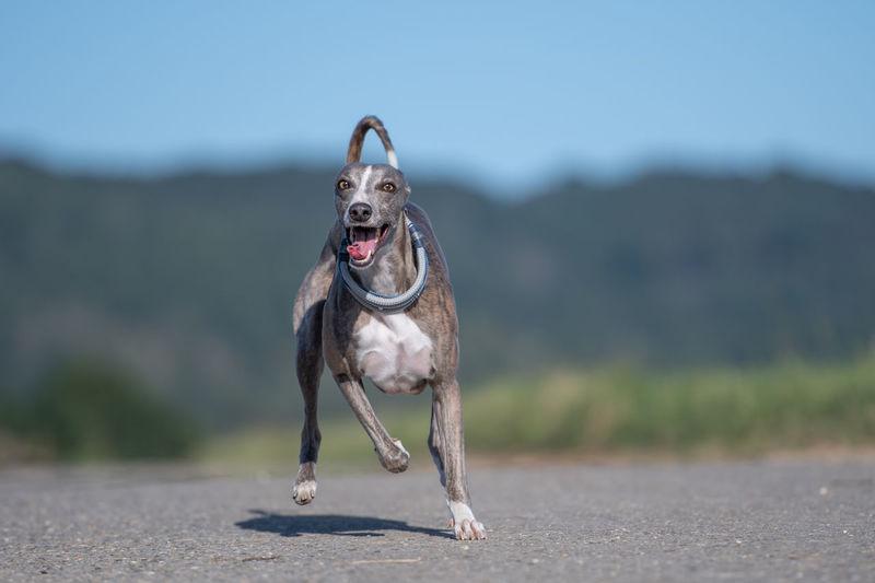 Portrait of dog running on land