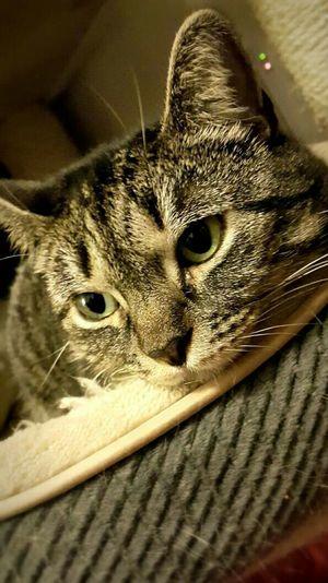 Kitty Cat Cutie Kiki Lala Kikilala Lovely Animal