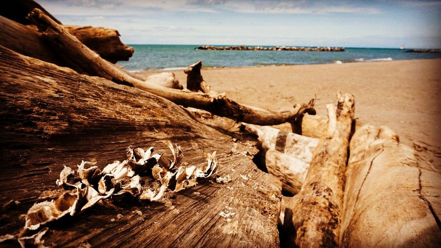 Saw this drift on Lakeview park. Thought if I could shoot at an angle I could get a cool picture. What do you think? Beach Lake Driftwood Landscape Ohio Lorain Cleveland The Great Outdoors - 2017 EyeEm Awards