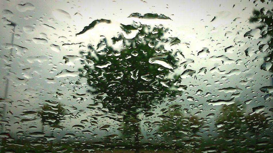 Raining Tree Tree Rain Raining Raindrops