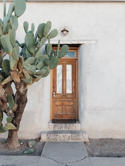 Rustic wooden door and large prickly pear cactus in desert town Barrio Rustic Architecture Built Structure Building Exterior Plant Wall - Building Feature Day Building House Entrance Cactus Outdoors Residential District Door Window Growth No People