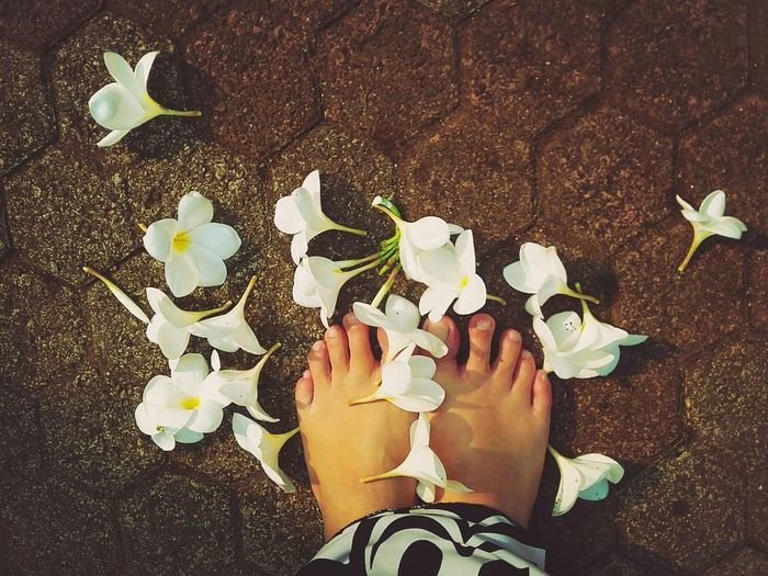 Learn & Shoot: Single Light Source My Feets Deceptively Simple Eye4photography  Frangipani Samsungphotography Getting Inspired Urban Gardening