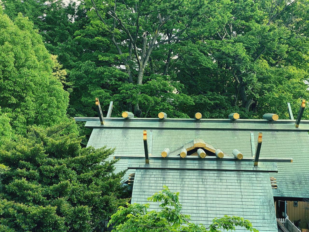 VIEW OF BIRD IN PARK