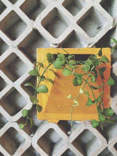 Close-up plants growing through mailbox