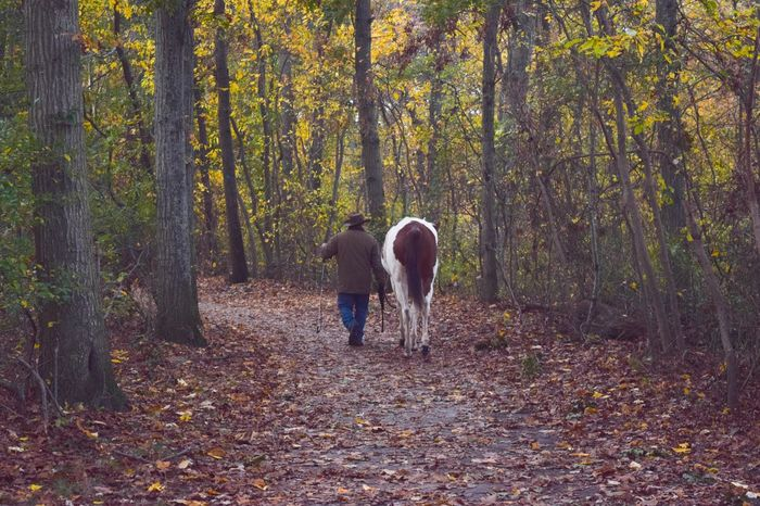 Man walking his horse in the woods NewEyeEmPhotographer Pathway Path Man And Horse Leaves Trees Forest Tranquil Idyllic Fall Colors Leading Walking Man Horse Forest Autumn Land Leisure Activity Nature Beauty In Nature Real People Day Outdoors