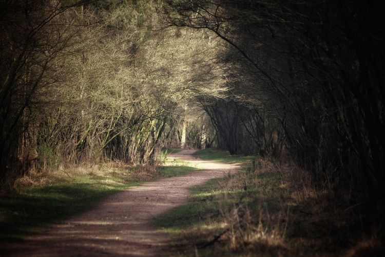 Pathway Canon_photos Canon EOS 70D Canonphotography Capture The Moment Canon 70d From My Point Of View No Tripod Beautiful Day Pure Photography Eyemphotography Eyem Best Shots Trough The Trees Tree Nature Outdoors The Way Forward Forest No People Summer Shadow Scenics Beauty In Nature Rural Scene Grass Love Yourself