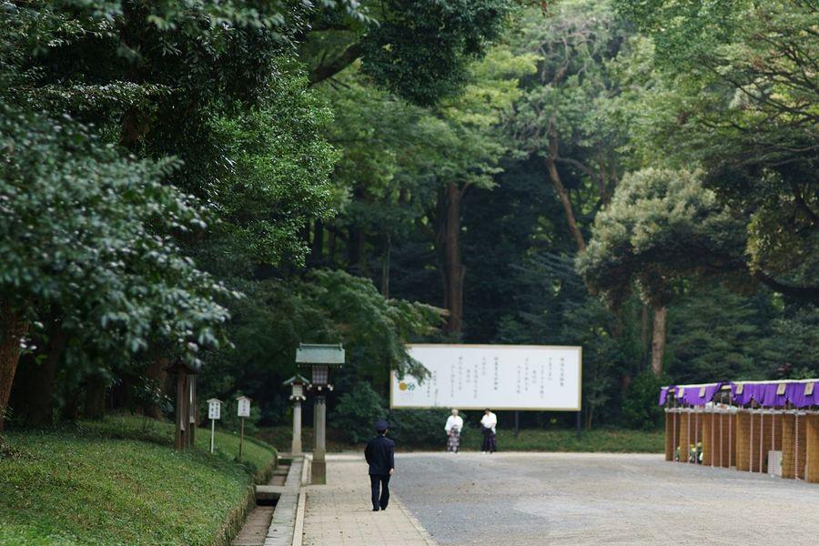 Shrine Forest Shinto Shrine Green Road Tree One Person Men Walk No People Meiji-Jingu Tokyo Japan Tokyo,Japan Travel White Board Green And White Sanctuary