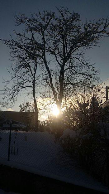 Trees Relaxing Enjoying Life Wintertime Sun Shadow