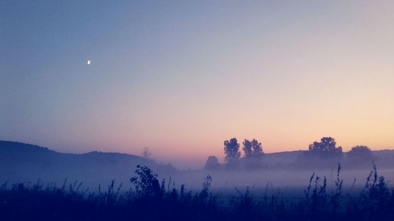 Sky Sunset Evening Mist Misty Evening Misty Landscape Mistycal Landscape Evning Sky EyeEm Selects Astronomy Tree Moon Fog Sunset Autumn Half Moon First Eyeem Photo