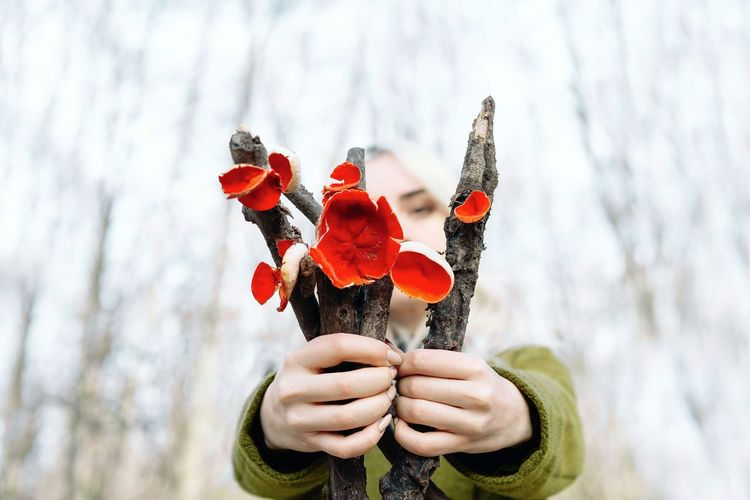 Close-up of woman hand holding red mushrooms against trees
