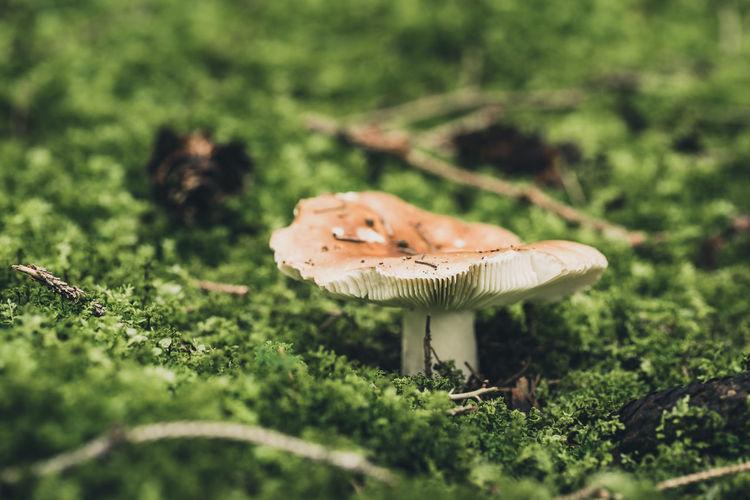 Close-up of mushroom on field
