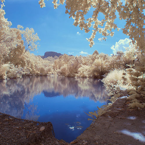 National Zoo Park, Malaysia Infrared Photography Beauty In Nature Blue EyeEm Nature Lover False Color Foliage Infrared Lake Lakeshore Nature Outdoors Power In Nature Reflection River Scenics Skies Standing Water Tranquil Scene Tranquility Tree Water Waterfront