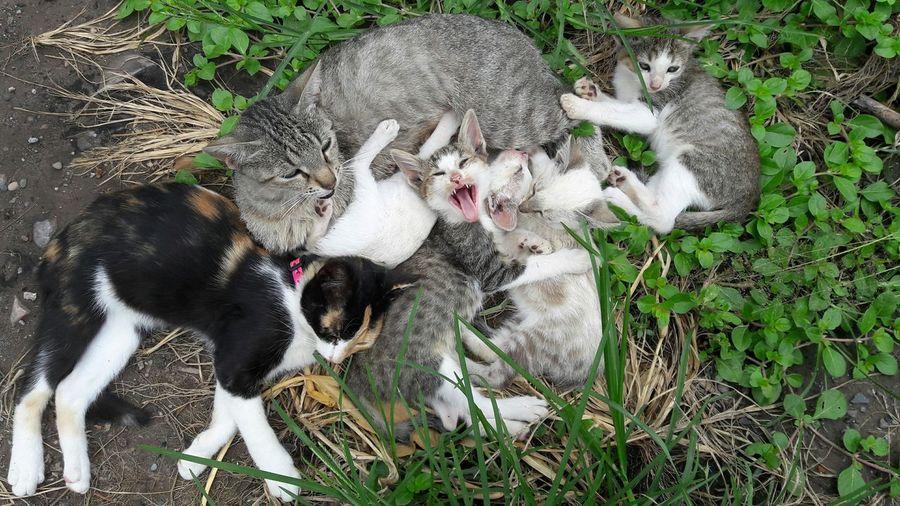 Mimi, gatita calico 7 (con su familia) Cat Cats Feline Sleeping Cat Animal Stray Calico Calico Cat Calico Cats Are Special Beauty In Nature Gato Tricolor Beautiful