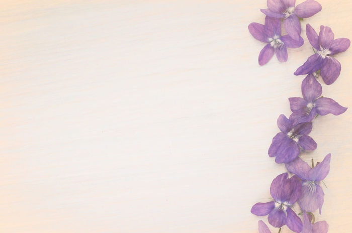 violets backdrop Violets Backdrops Beauty In Nature Close-up Day Flower Flower Head Fragility Freshness Growth Indoors  Nature No People Petal Plant Table Viola