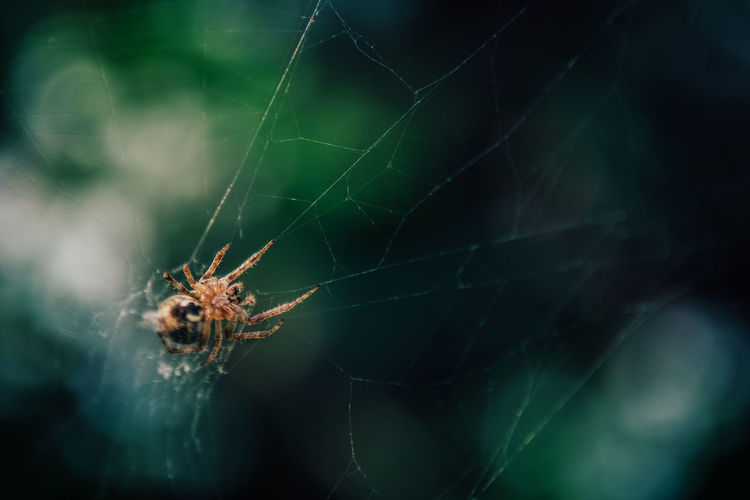 Arachnid Spider Animal Themes Spider Web Arthropod Invertebrate Animal Animal Wildlife Close-up Animals In The Wild Fragility Insect One Animal Focus On Foreground No People Day Selective Focus Animal Body Part Vulnerability  Nature Animal Leg Outdoors Web Poisonous