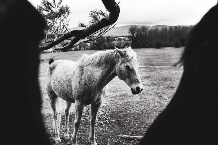Horse standing on field against sky