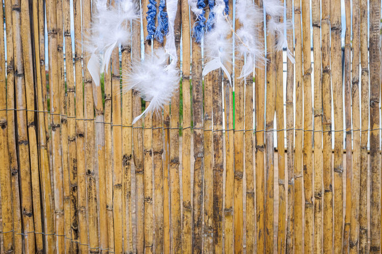 Close-up of white dandelion hanging on wooden fence