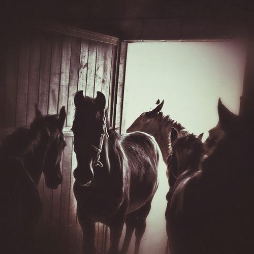 IPhoneography Foals Farm Life Tadaa Community