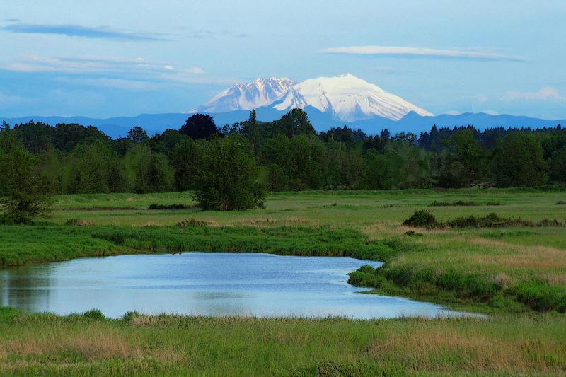 Mt. St. Helens Beauty In Nature Lake Landscape Mountain Mt. St. Helens  Nature Scenics Tranquil Scene Volcano Washington