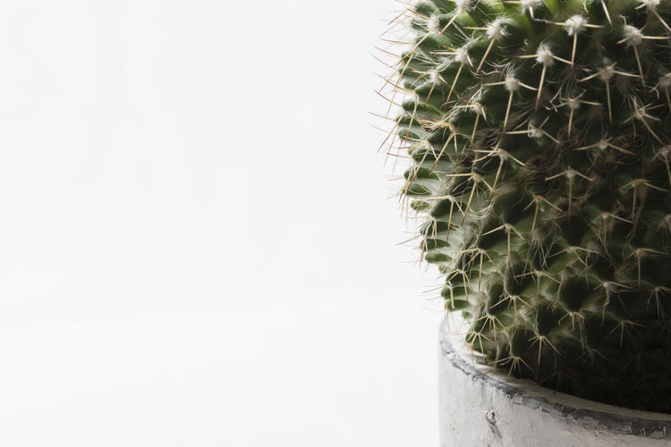 Cropped close-up of cactus against white background