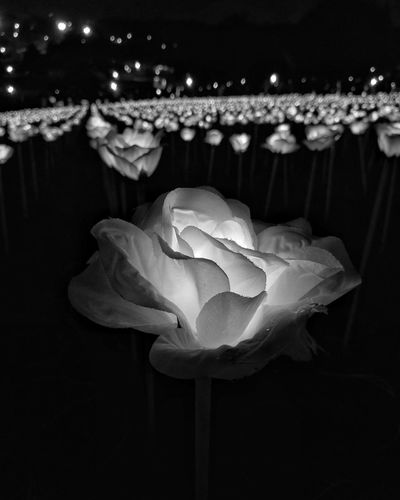 we can complain because rose bushes have thorns, or rejoice because thorn bushes have roses. HuaweiP9plus Bw Blackandwhite Mylightsensation