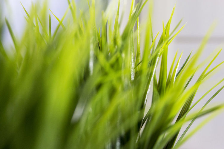 Plastic decoration - Artificial Flower Freshness Grass Green Color Plant Plastic Decoration Close-up Day Decoration depth of field Dof Freshness Grass Green Color Growth Nature No People Outdoors Plant Plastic Plastic Flower Plastic Grass Slective Focus