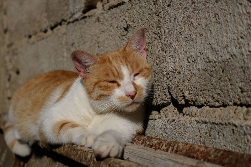 Close-up of ginger cat on wall