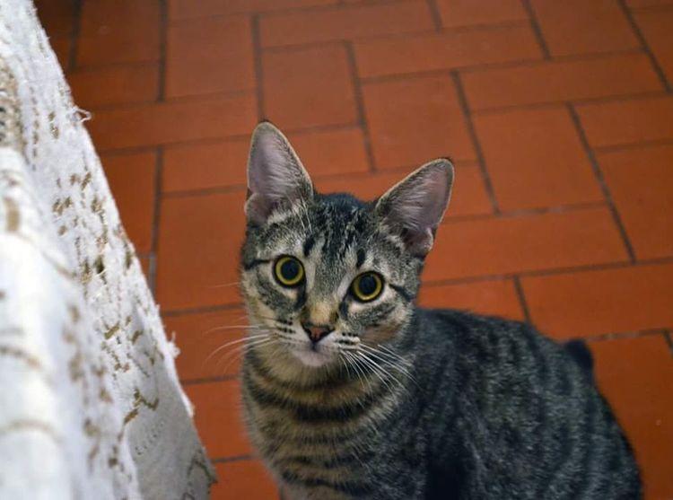 Puflito Gato Cat♡ Cats RosarioCity