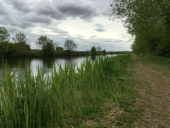 Walking by the canal Tranquility Canal Reeds Enjoying The View Towpath