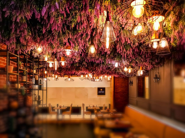 flower path Rose - Flower Roses Flower Flowers Light Illuminated Tree Hanging Architecture Built Structure Blooming Building Residential Structure Plant Life Flower Head Growing