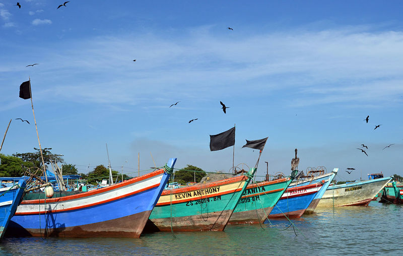 Bird Boat Colored Boats Northern Peru Peru Puerto Pizarro Sea Birds South America Südamerika Tumbes
