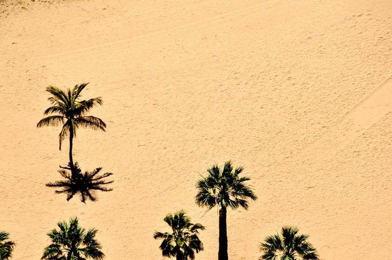 www.starttoshoot.com Beach Coast Europe Island Palm Trees Palms Sand SPAIN Tenerife