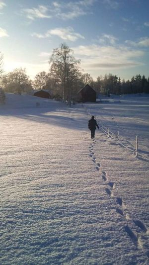 The most beautiful Swedish winter, no filters used just natural light