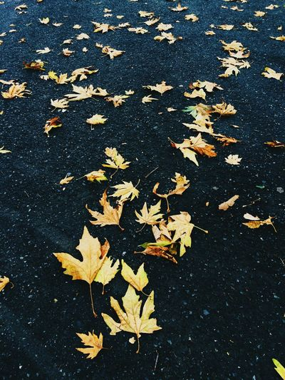 On The Road Nature Taking Photos Leaf Autumn EyeEm Nature Lover Autumn Colors Hello World Check This Out