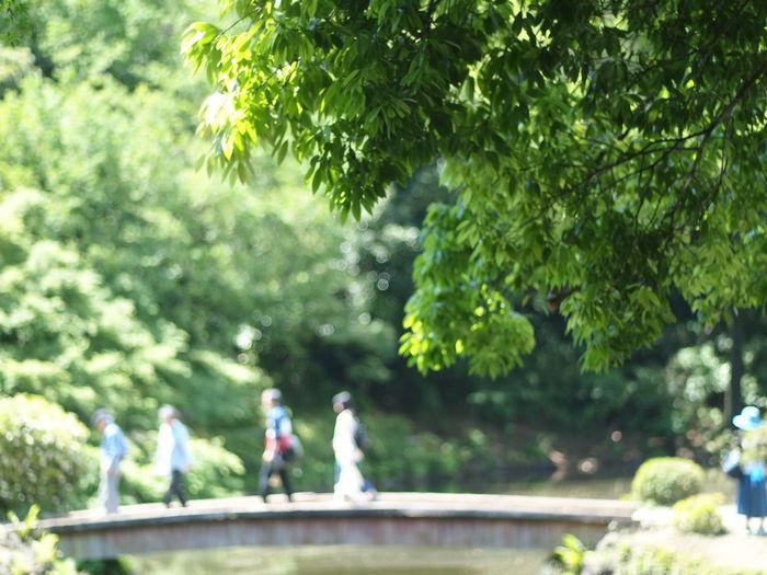 I bought a camera(used). Green Shinjuku-gyoen Tokyo,Japan Olympus Bridge Tree Water Togetherness City