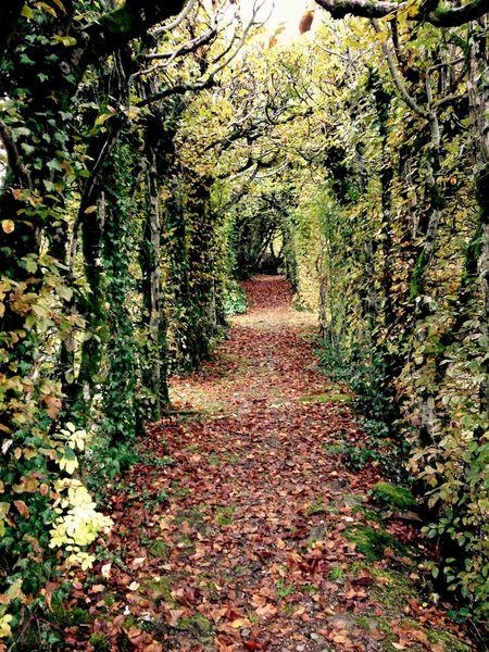 Nature Leaves Alice In Wonderland Romantic Autumn Autumn Colors Red Orange Yellow Brown
