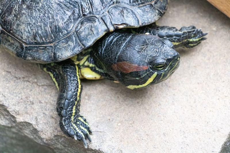 Turtle High
