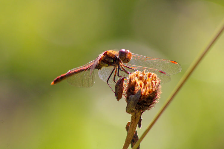 Close-up of insect on plant dragonfly