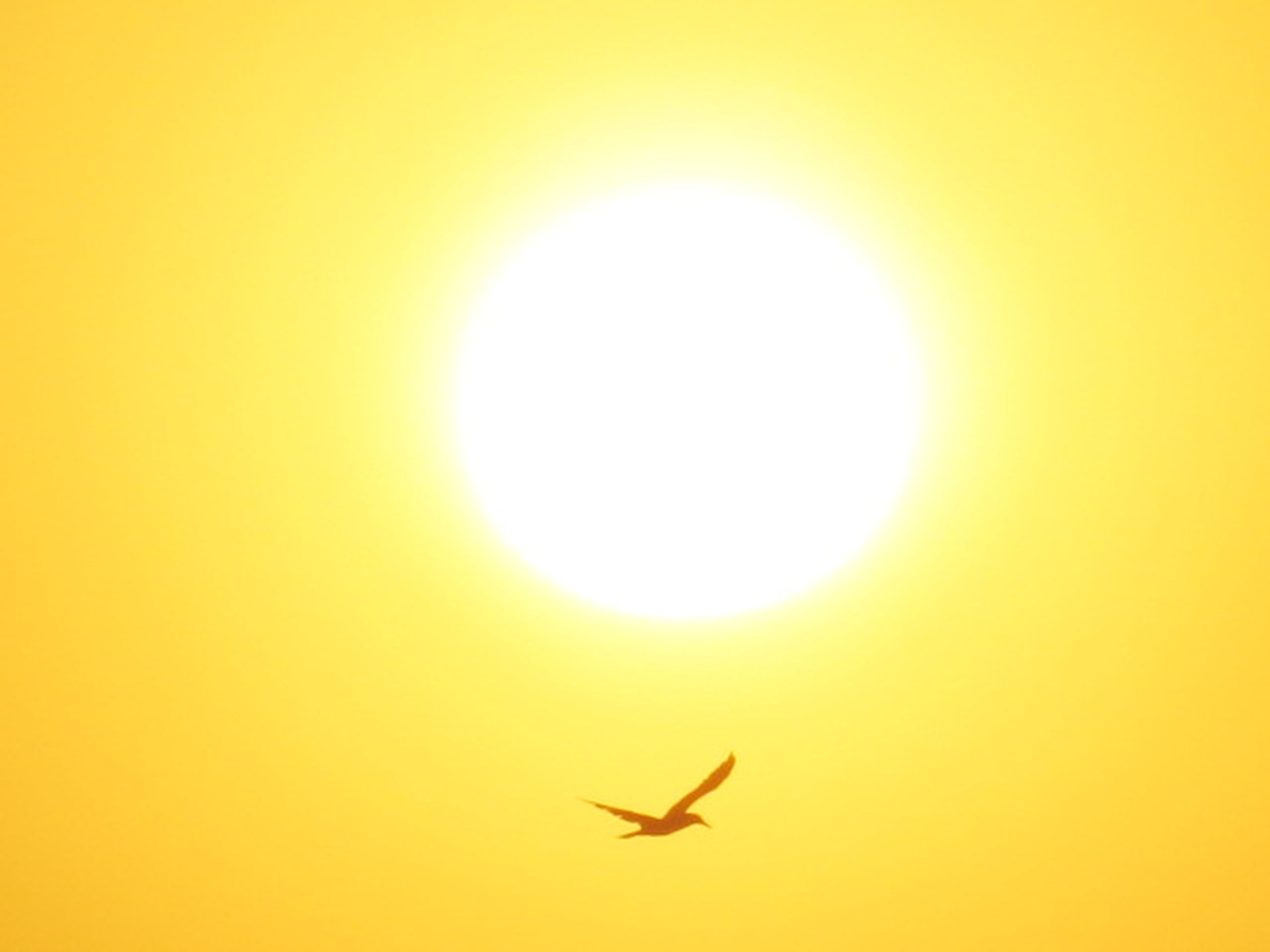 one animal, silhouette, flying, animal themes, animals in the wild, sunset, sun, yellow, animal wildlife, bird, outdoors, no people, full length, nature, day, spread wings, airplane, sky